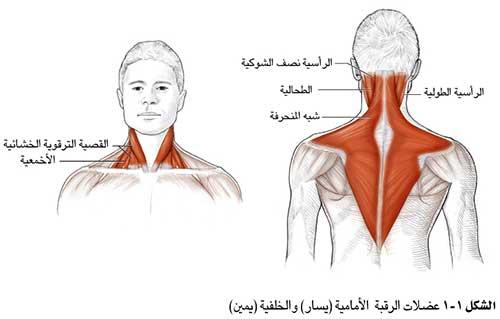 الم اسفل الرقبة من الامام اعراض و اسباب التهاب العنق الغدر والخيانة