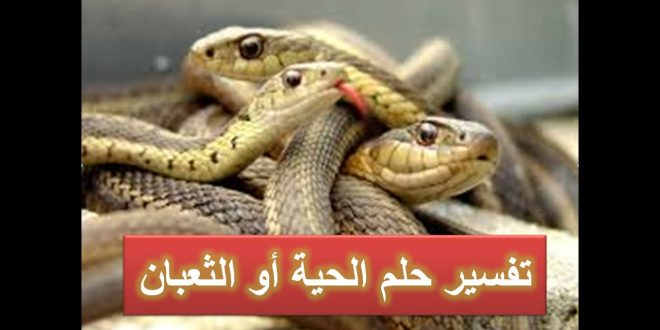 صورة تفسير رؤية الافاعي , معني الثعابين في الحلم