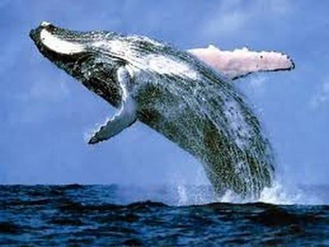 صورة تفسير رؤية الحوت في المنام , انا حلمت بحوت وخايف