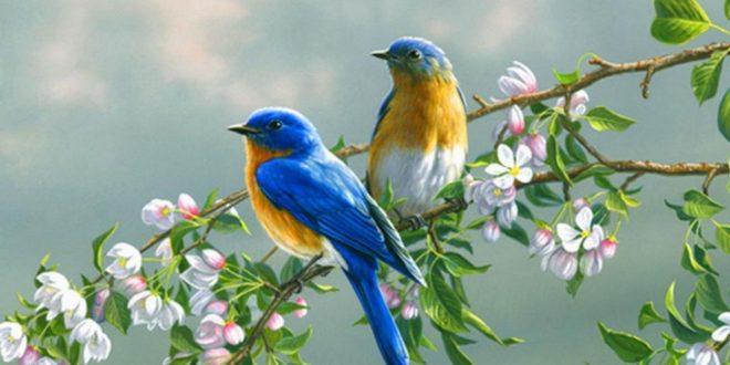 صورة صور طيور وعصافير , صور عصافير جميلة وطيور في الغابات والحدائق