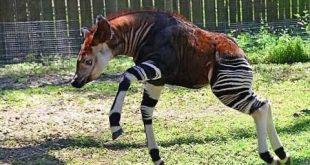 صورة حيوانات غريبة وعجيبة حقيقية , تطور اشكال الحيوانات