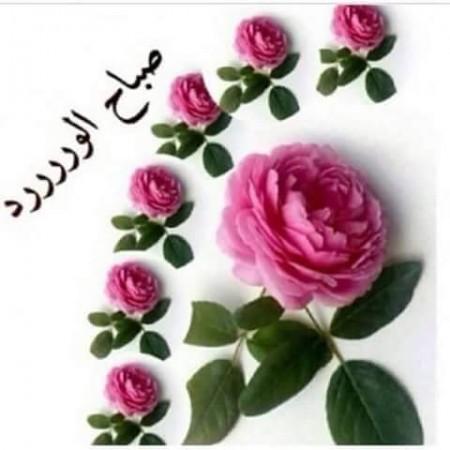 صورة اجمل الورود الصباحية , انتي اجمل لفة ورود