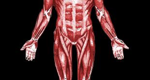 ما هو الجهاز العصبي , دور الجهاز العصبي في الجسم