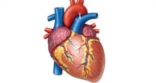 صورة انسداد الشرايين في القلب , اسباب ضيق انانيب القلبية