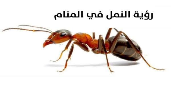 صورة تفسير حلم رؤية النمل , اراء العلماء بخصوص النمل فى الحلم
