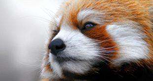 صورة خلفيات حيوانات جميلة , البوم صور حيوانات تحفة
