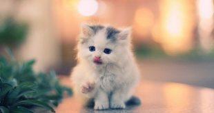 صورة حيوانات صغيرة بالصور , صورة طريفة لحيوان صغير