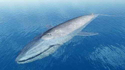 صورة اكبر حوت بالعالم , رجل اعمال و الحوت الاقتصادي