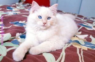 صورة صور قطط , القطة و علاقتها بالعفاريت