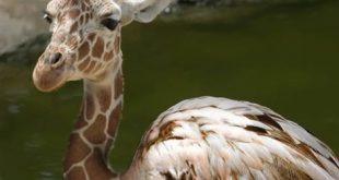 صورة صور حيوانات عجيبة , الحيوانات باشكال مخيفة