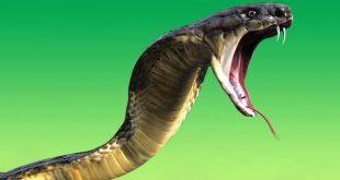 صورة اسم صوت الثعبان , انسان صوته مثل فحيح الثعبان
