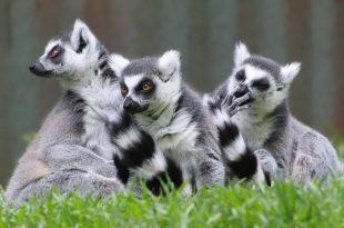 صورة حيوانات بحرف اللام , تعرف على انواع غريبة من الحيوانات