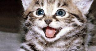 صورة صور القطط , خلفيات قطط للكمبيوتر