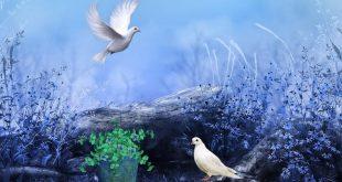 صورة صور طيور حلوه , طيور تتمتع باشكال جذابة والوان فاتنة