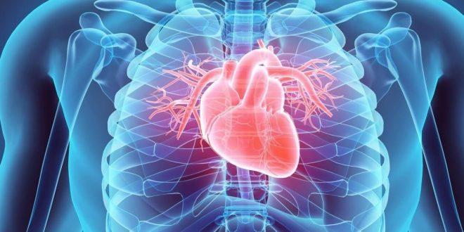 صورة كيف يعمل القلب , مما يتكون القلب وما هي ٱلية عمله