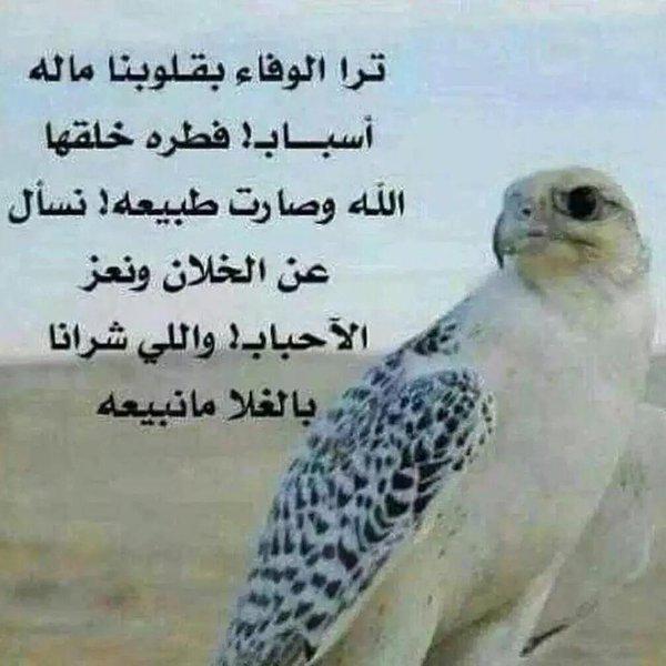 صورة ابيات شعريه مدح , تعالي امدح و امشي