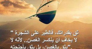 صورة حكم واقوال رائعة عن الحياة , الحكمة من الحياة في كلمة