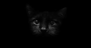 صورة خلفيات سوداء , خلفية سمرا بجودة عالية