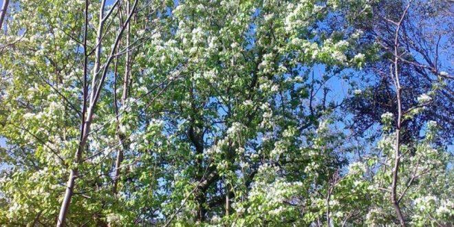 صورة مقدمة عن الشجرة , تعرف علي جذور شجرة واهميتها