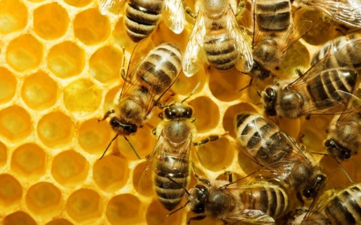 صورة تفسير حلم قرص النحل , ما مدى اذاه و مدى نفعه فى المنام