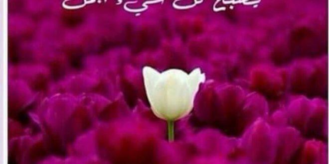 صورة صور صباح الخير عن الحب , عبارات صباحية الي الاحباء
