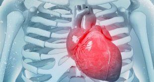 صورة كفاءة عضلة القلب 65 , طبيعة عمل العضلة و الحفاظ على صحتها