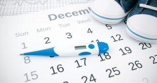الدورة المنتظمة والحمل , وما هى افضل فترة للتبويض و الخصوبة