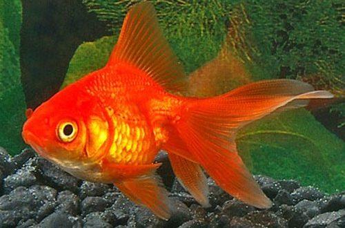صورة انواع اسماك الزينة بالصور ,الوجه الاخر لاسماك الزينة وروعتها