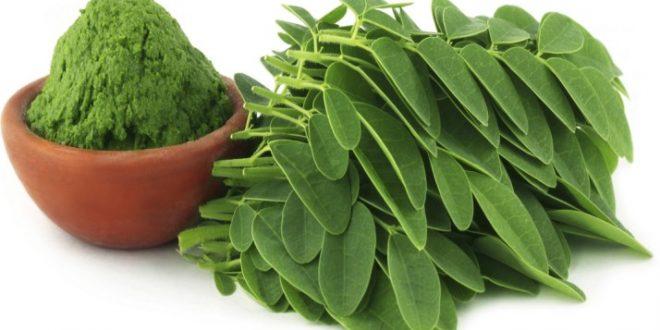 صورة طريقة استخدام المورينجا ,الشكل الاخر لعشبة المورينجا