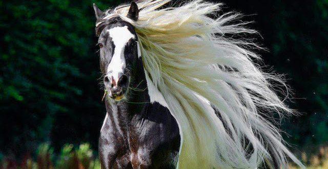 صورة صور اجمل خيول في العالم , عالم من الفروسية الساحرة