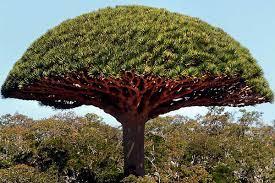 دلالة غرس شجرة في المنام