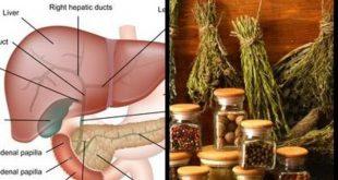 صورة اعشاب مفيده للكبد , تعرف على فوائد الكركم للكبد 3500 3 310x165