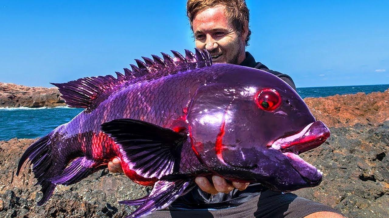 صورة اغلى سمكة في العالم , لن تصدق سعر هذه السمكة 3507 1