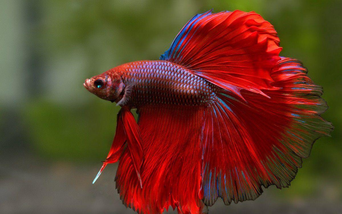 صورة اغلى سمكة في العالم , لن تصدق سعر هذه السمكة 3507 3