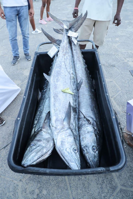 صورة اغلى سمكة في العالم , لن تصدق سعر هذه السمكة 3507 7